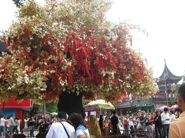 夫子庙的许愿树