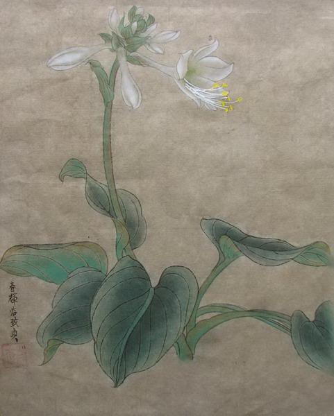 工笔花卉小品三幅《玉簪花》《扶桑花》《秋葵花》-派