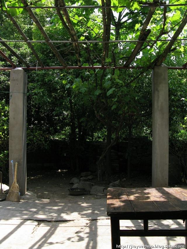 农村院子葡萄架效果图