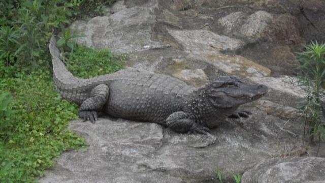苏州动物园_1001726910