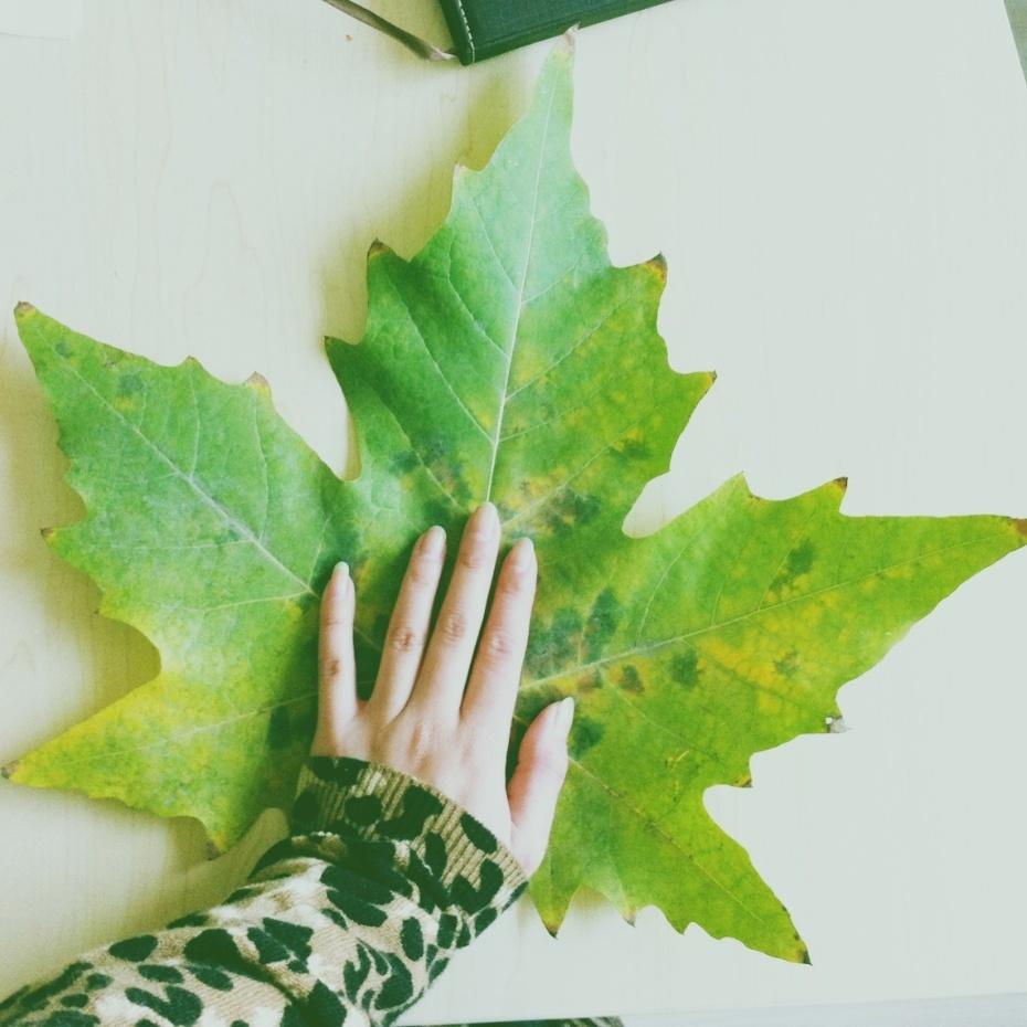 拍了好几张梧桐树叶逆光的照片,真心爱这种逆光!