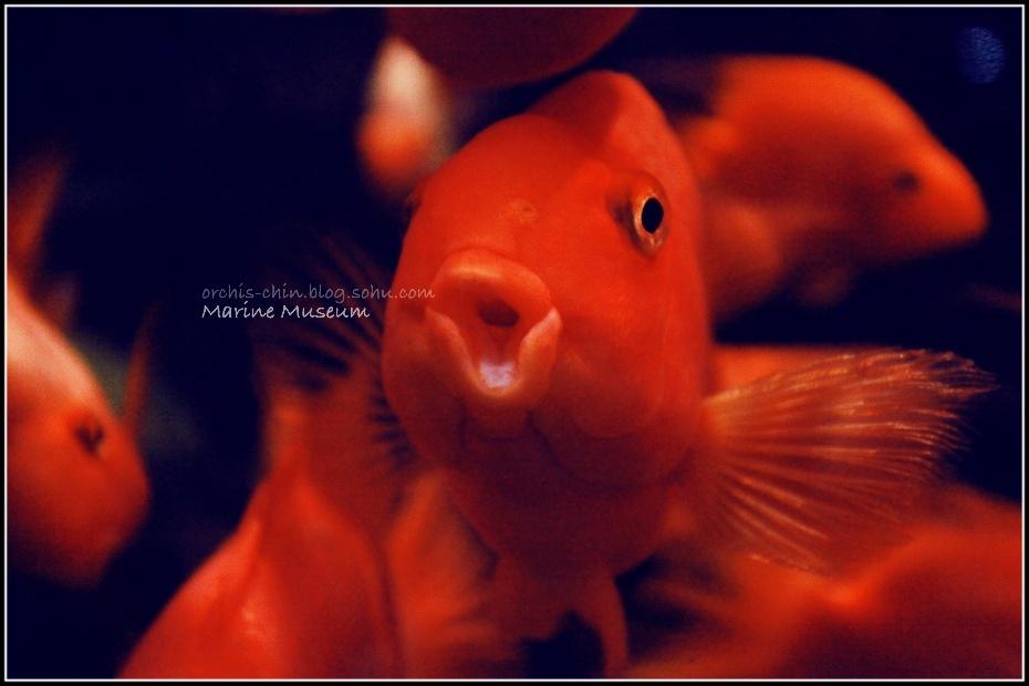 18-北京动物园海洋馆