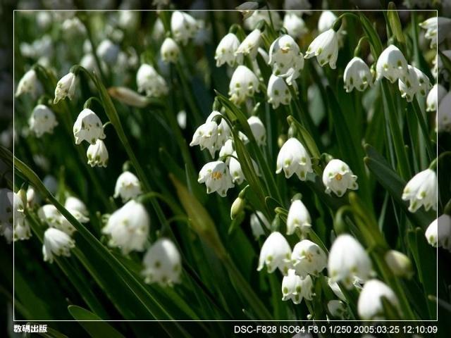 冰百合花朵简笔画图片