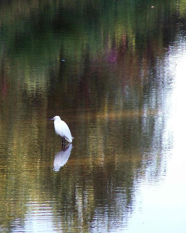 赶海看日出,北戴河鸽子窝湿地-师生与朋友的星空-搜狐