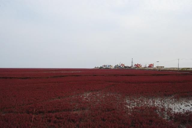 红海滩上采油树 - 长庆石油人 - 同城友约 - 搜狐圈子