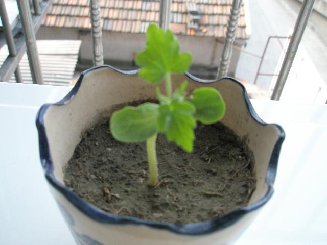 盆景 盆栽 植物 640_480