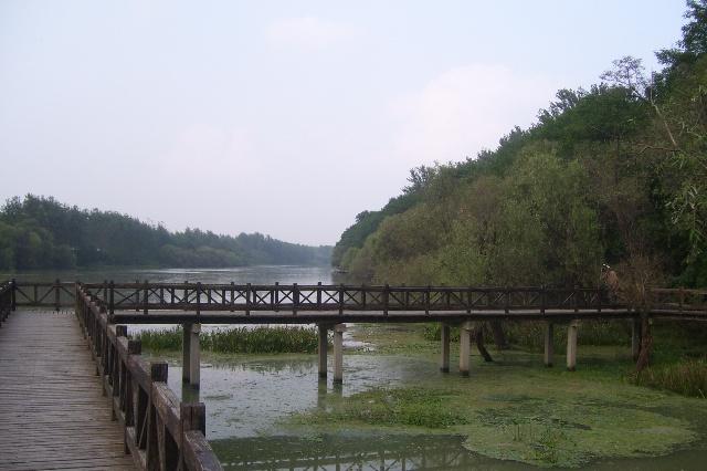 这是淮安的柳树湾!在废黄河上.是一片幽静的去处.