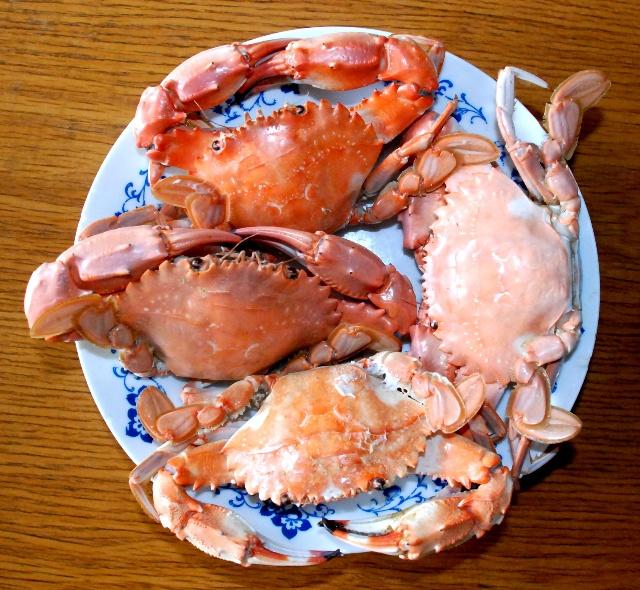 海红螃蟹图片