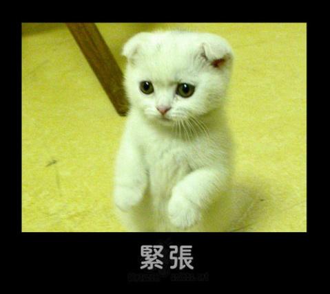 可爱的猫猫狗狗搞怪表情