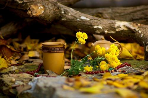 当视线落在银杏树下,落在老者的白发上,落在少年的茶杯中