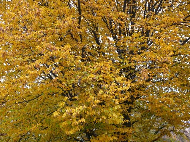主题 童话国度里秋天的枫叶