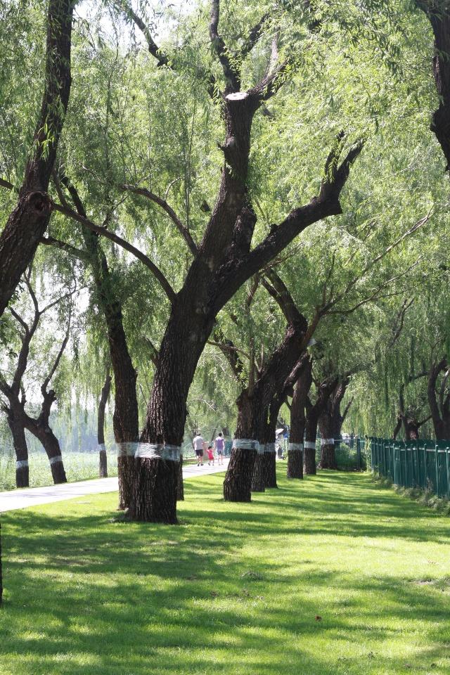 夏天树枝手绘图