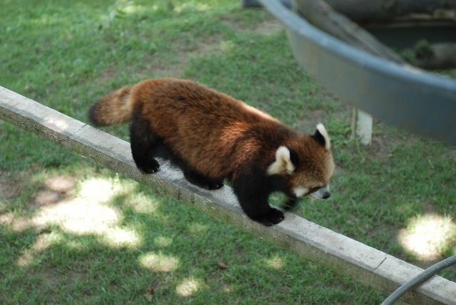 威海西霞口野生动物园-狗旺旺的小狗窝-搜狐博客