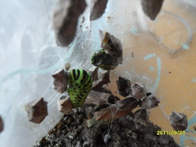 吃虫子的虫离开了-盘龙老虎的博客 我的搜狐