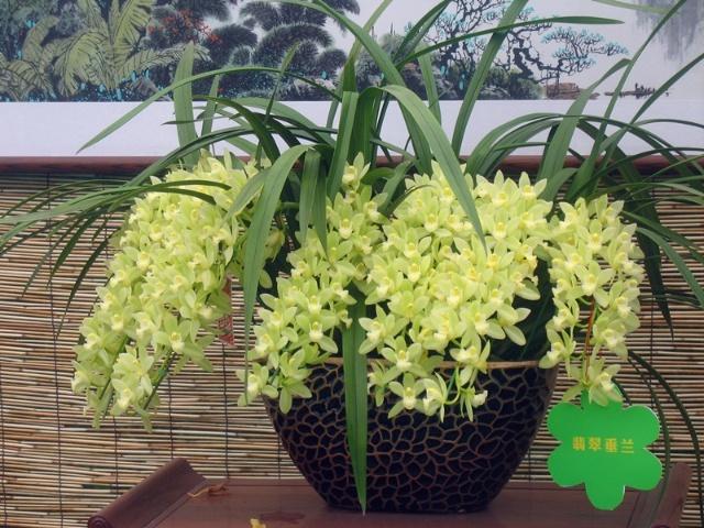 杜鹃等大众花卉外,还展出了黄金香柳,地涌金莲,鹤望兰等许多珍稀名贵